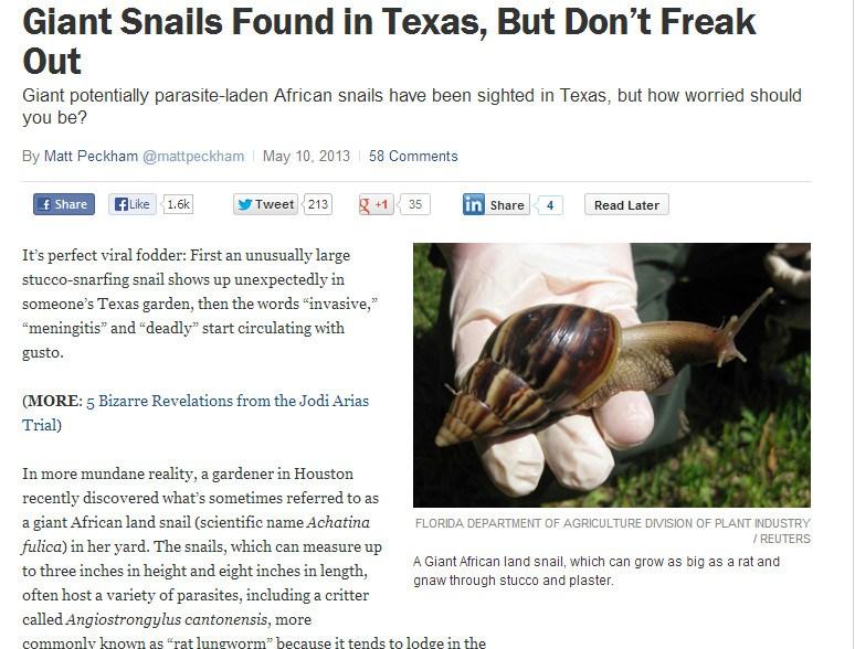 giant-snails